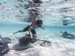 Reef Fish Cayman