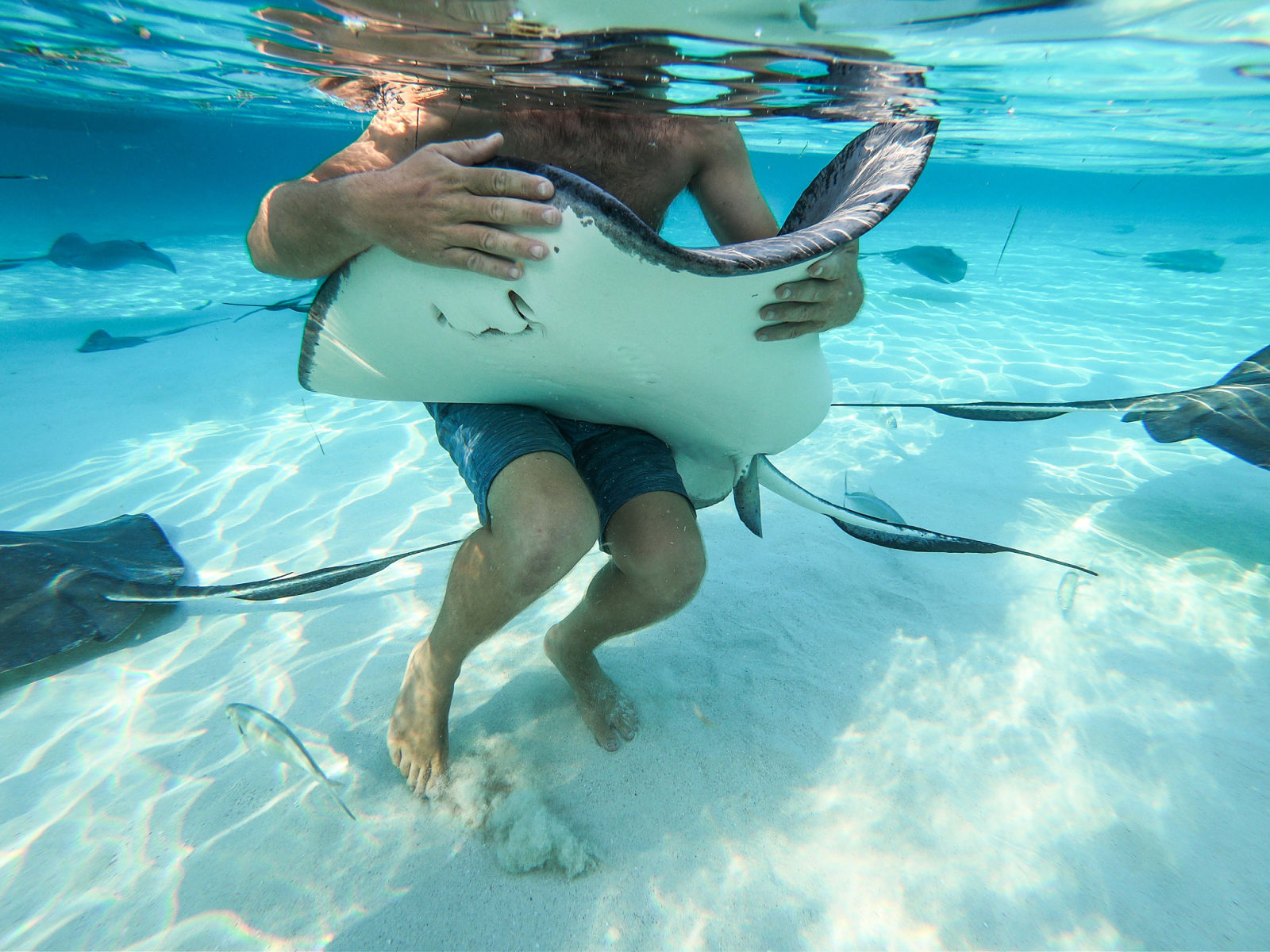 cayman islands stingray city tours