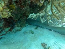 Crazy Crab Cayman