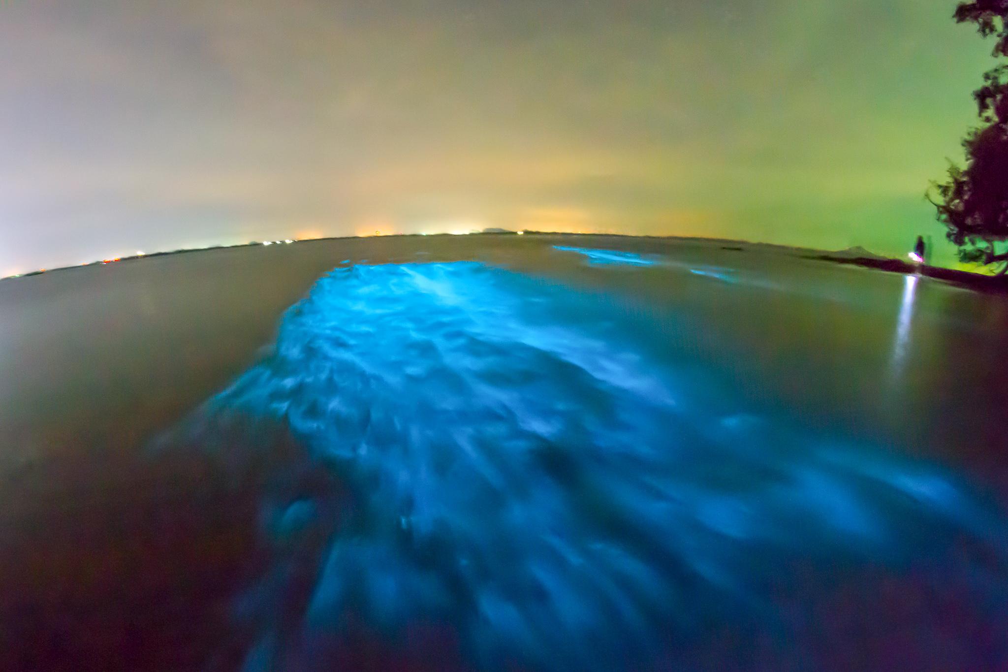 An example of bioluminescence